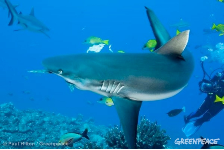Is the tide turning in favour of sharks?