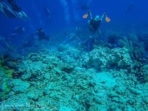 Damaged Coral Reef in Grand Cayman
