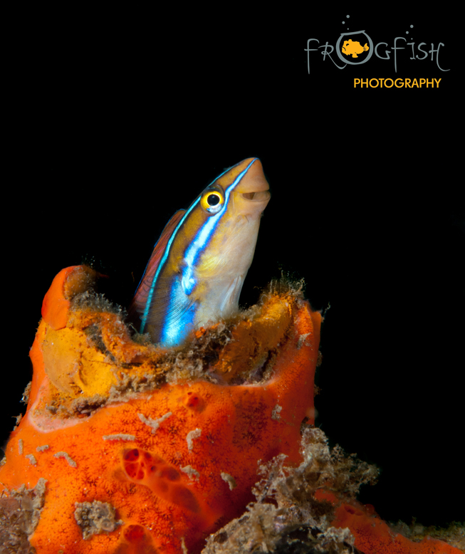 s_Bali is heaven for acro marine life as this blenny tried to prove