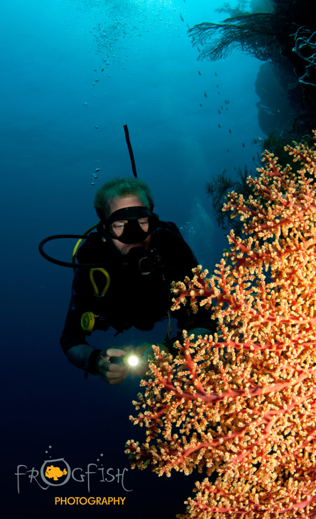 s_The wall on Mejangan Island is a real treat for coral enthusiasts