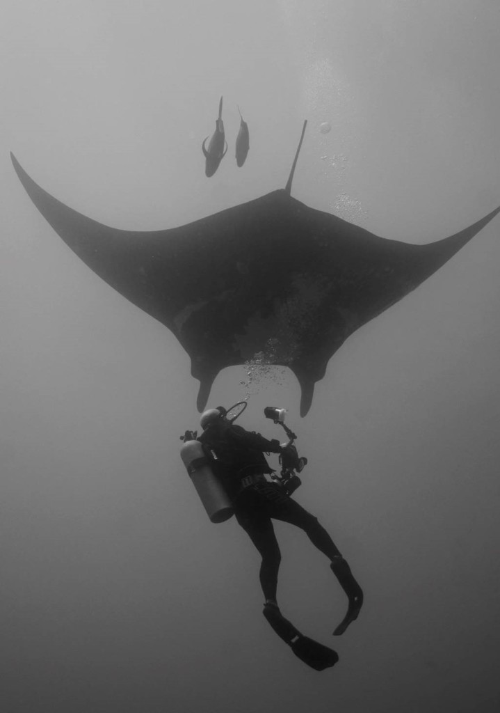 B&W Diver and Manta
