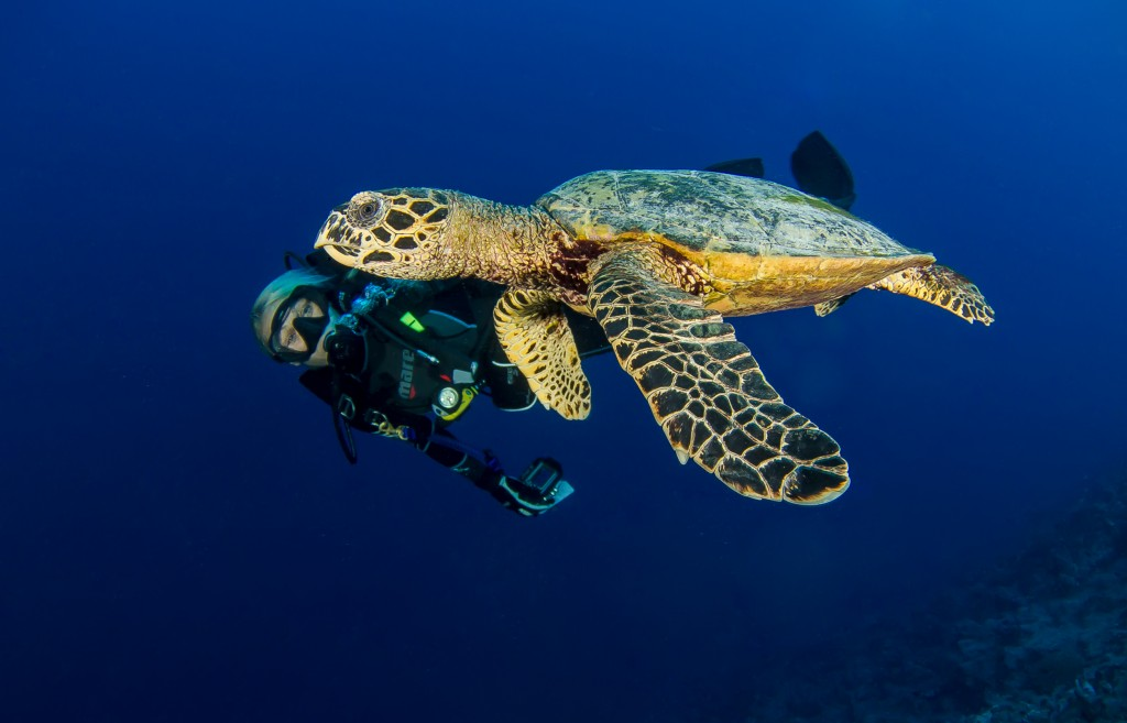 diver_with_turtle_hr