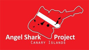 angelsharkproject_web