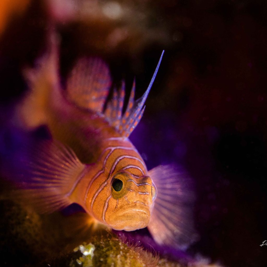disco time goby on the colours