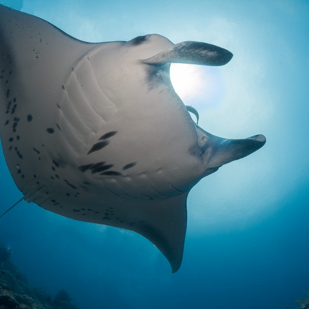 manta cleaning