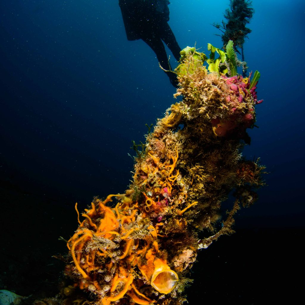 diver find a yawning frogfish