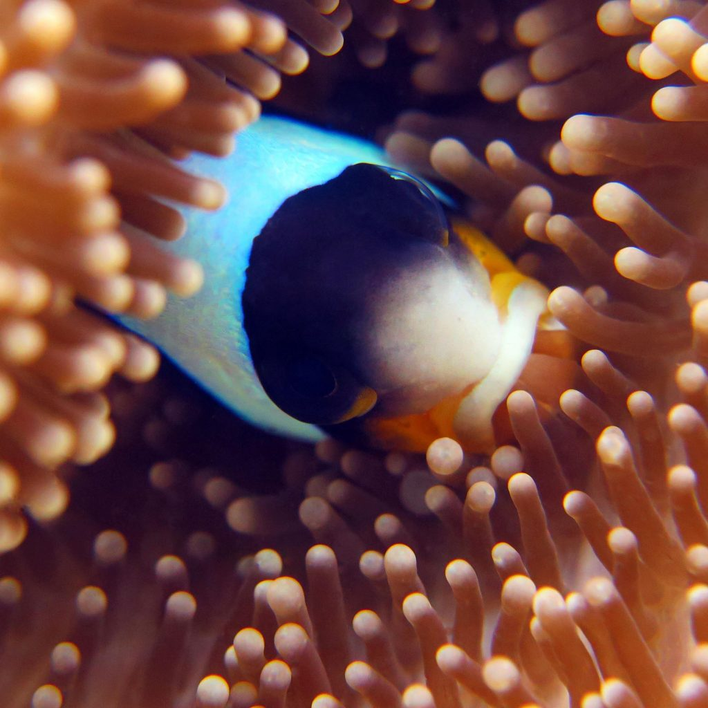 mouth full of anemone