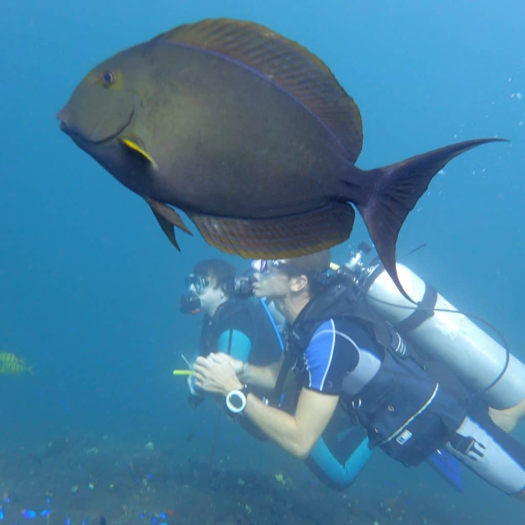a new dive buddy in bali