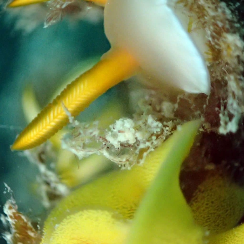 my future said by nudibranch