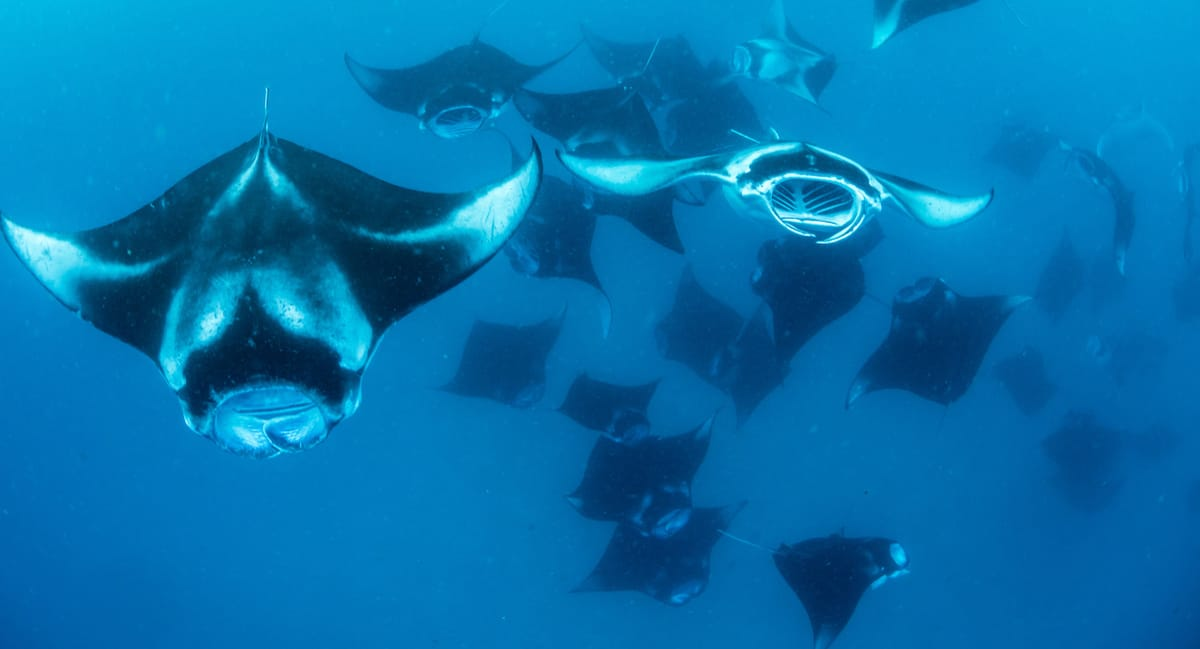 16 Top Places to Dive with Manta Rays