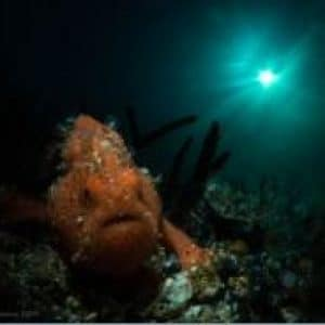frogfish taking a stroll