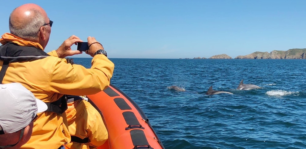 Bottlenose dolphins sighted on July 30th ©Laura Harm South Brecqhou Sark Channel Islands