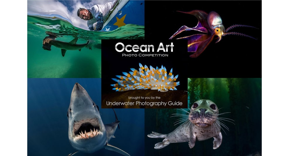 Ocean Art Safe Under the Sea Winners