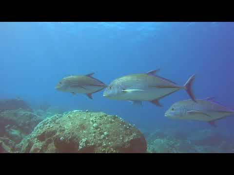 Diving during the Mauritius Wakashio Oil Spill (Watch Video)