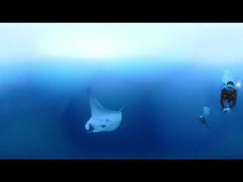 New Series: Dive Philippines – Part 4 (Watch Video)
