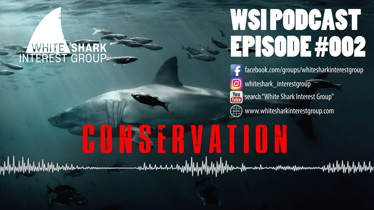 NEW: White Shark Interest Group Podcast Series – #002 – CONSERVATION