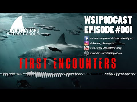NEW: White Shark Interest Group Podcast Series – #001 – FIRST ENCOUNTERS