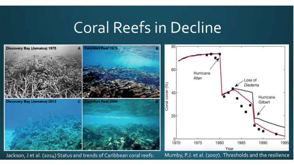 Guest Lecture- Dr Gretchen Goodbody-Gringley Coral Reef Resillience and Refugia