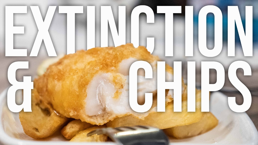1b. Overfishing – Extinction and Chips_Wide