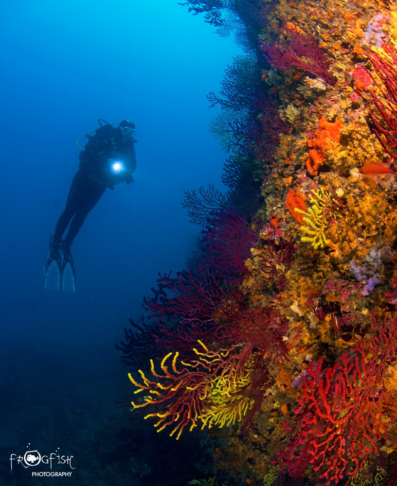 A diver hangs in the blue next to the coral covered wall