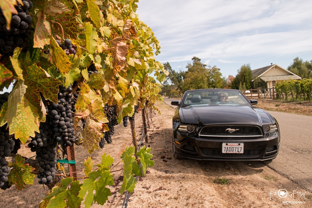 The Mustang and Vines