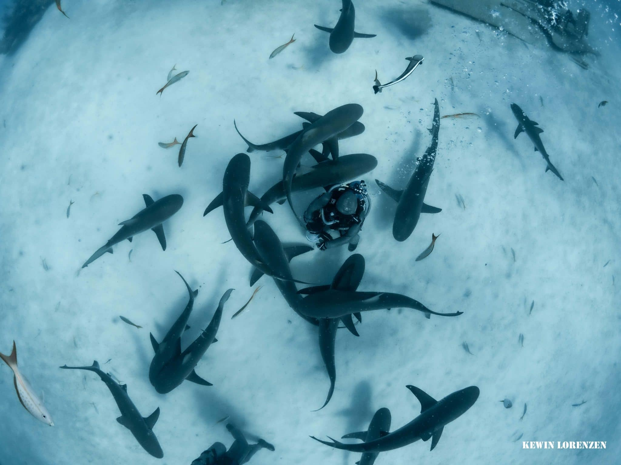 Cristina and her sharks_Image by Kewin Lorenzen