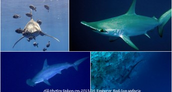 0416-sharks-collage-with-text-4.jpg