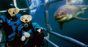 40thAnniversary_Diving-with-Great-Whites_Guadalupe.jpg