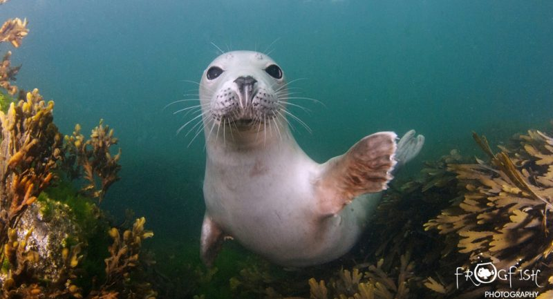 A-happy-Seal-Header.jpg