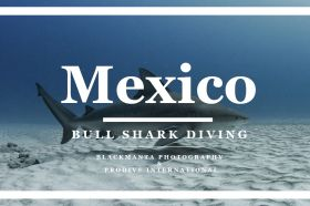 BULL-SHARK-DIVING-THUMBNAIL.jpg