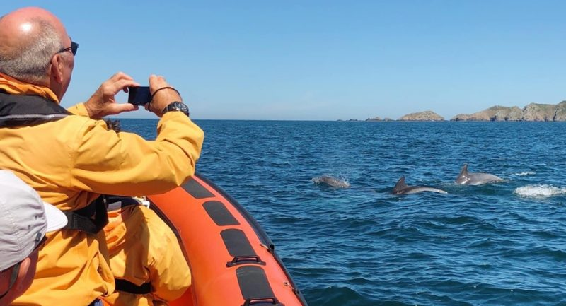 Bottlenose-dolphins-sighted-on-July-30th-©Laura-Harm-South-Brecqhou-Sark-Channel-Islands.jpg