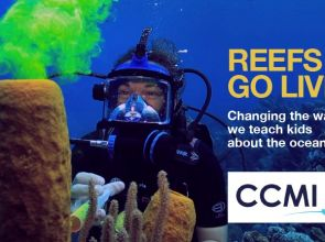 Video series: REEFS GO LIVE with The Central Caribbean Marine Institute – CCMI – Part 12 (Watch Video)