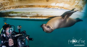 Caro-La-Paz-Sea-Lion-Header.jpg