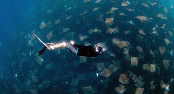 Cover_JayClue_diving_with_mobulas.jpg