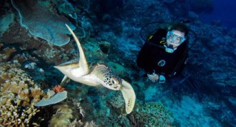 DivingFeature6_Beth-and-Shaun-Tierney.jpg