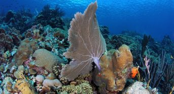 For-Dive-Curacao-by-Turtle-Ray-Productions-HD-Eastpoint.jpg
