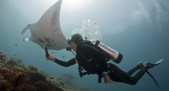 Manta-Ray-Tourism-Copyright-Marine-Megafauna-Foundation-e1487190220293.jpg
