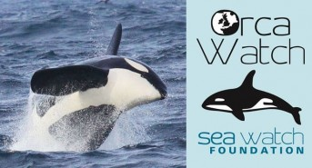 Orca-Watch-Logo-Image.jpg