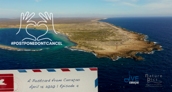 Postcards-from-Curacao-4.png