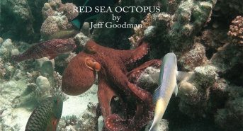RED-SEA-Octopus.jpg