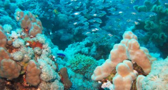 Renewing-our-Coral-Reefs-1.jpg