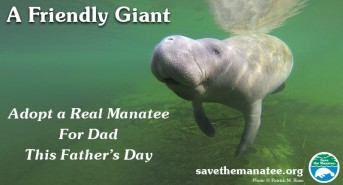 SMC-Fathers-Day-Web-banner-Scubaverse_use.jpg