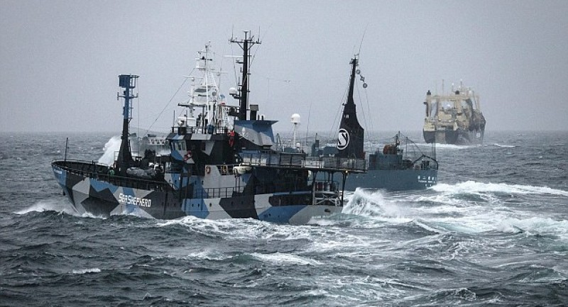 Sea-Shepherd-Boats.jpg