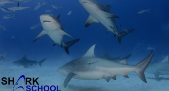 Sharkschool-2016.jpg