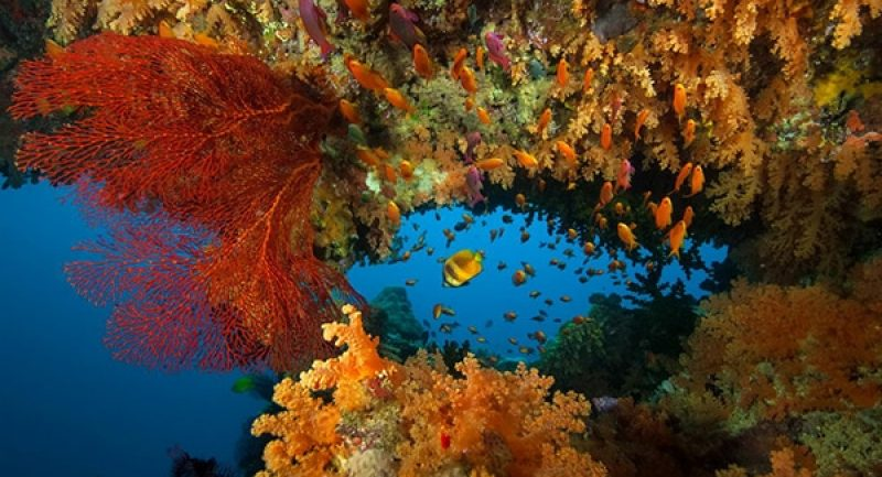 VV-colourful-corals.jpg