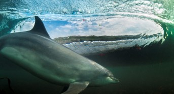 dolphin-surfing-by-George-Karbus-winner-of-RSWT-photo-comp-2013.jpg