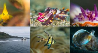 lembeh_vs_anailao_shootout-copy.jpg