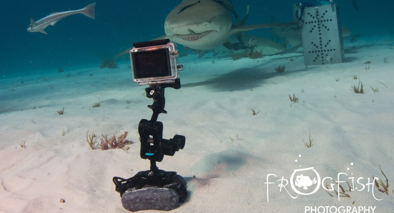 s_GoPro-mounted-on-Weight-Plate-with-Lemon-Shark-e1455637660119.jpg