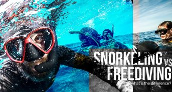 snorkeling-vs-freediving_FB.jpg